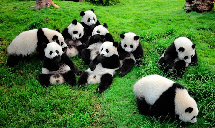 Wildlife in China